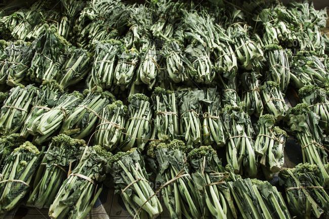 Large heap of tied bundles of fresh broccoli, Myanmar, Shan, Myanmar