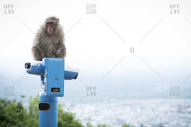 View of single monkey sitting on top of coin operated binoculars, Arashiyama Monkey Park, Kyoto, Japan