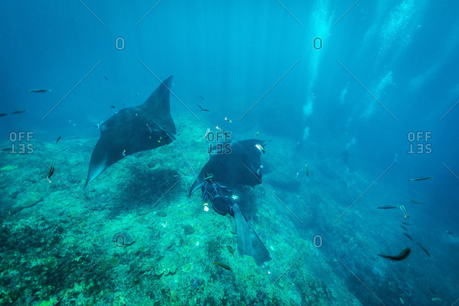 Swimming with mantas, Nusapenida, Bali, Indonesia
