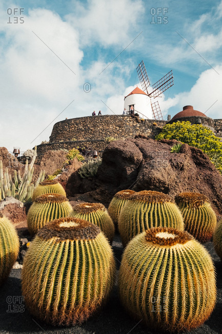 Cactus Garden with round cacti in front of windmill on hill visited by tourists, Lanzarote, Canary Islands, Spain