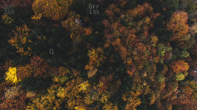 Bird's eye view of colorful autumn trees in France