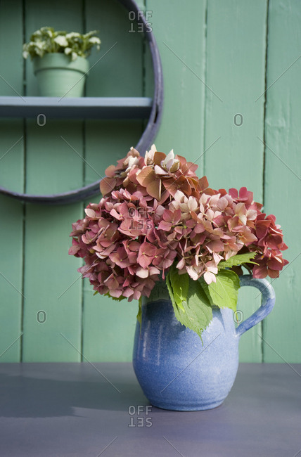 Flower decoration- flour sifter- hortensia in stone jug