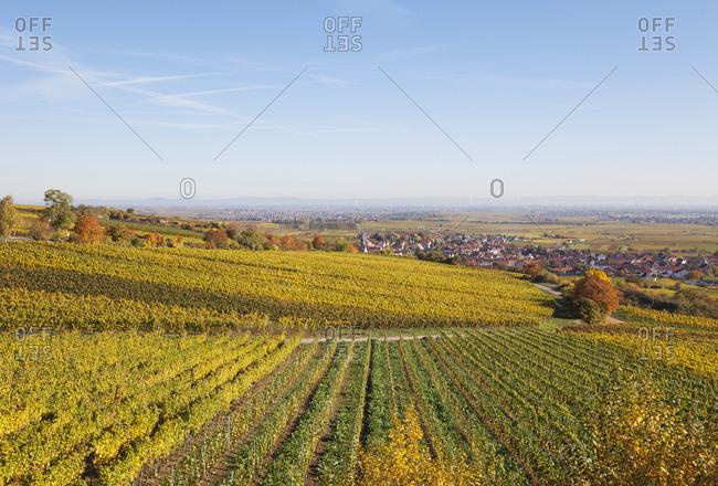 Germany- Rhineland-Palatinate- Kallstadt- vineyards in autumn colours- German Wine Route
