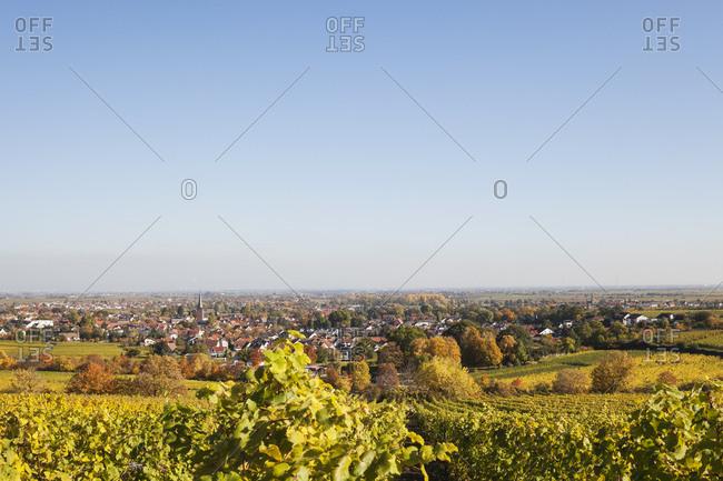 Germany-Rhineland-Palatinate- Pfalz- Deidesheim- German Wine Route- vineyards in autumn colours- Ludwigshafen in distance
