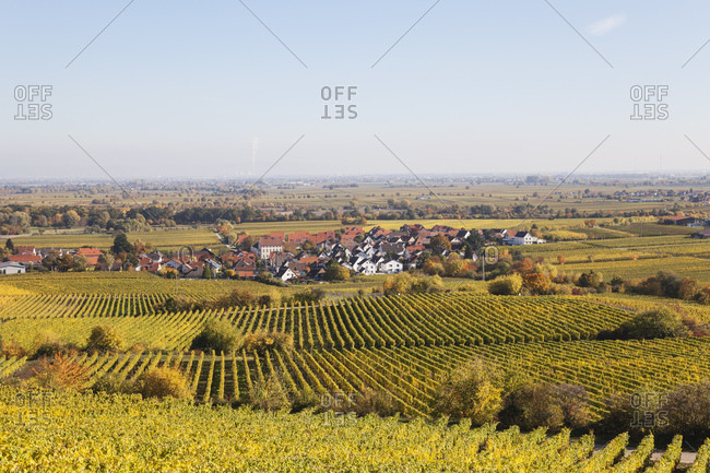 Germany-Rhineland-Palatinate- Pfalz- German Wine Route- wine village Forst and vineyards in autumn colours