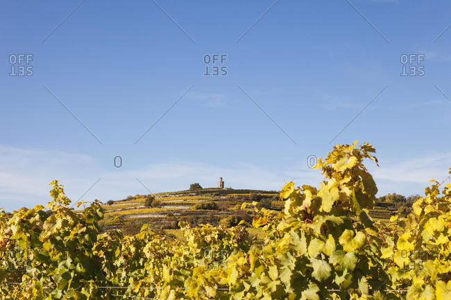 Germany-Rhineland-Palatinate- Pfalz- German Wine Route- Flaggenturm on Fuchsmantel hill and vineyards in autumn colours