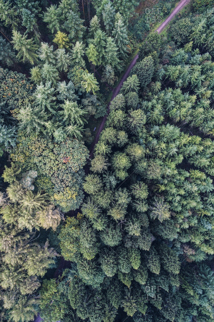 UK- Wales- pine forest seen from above