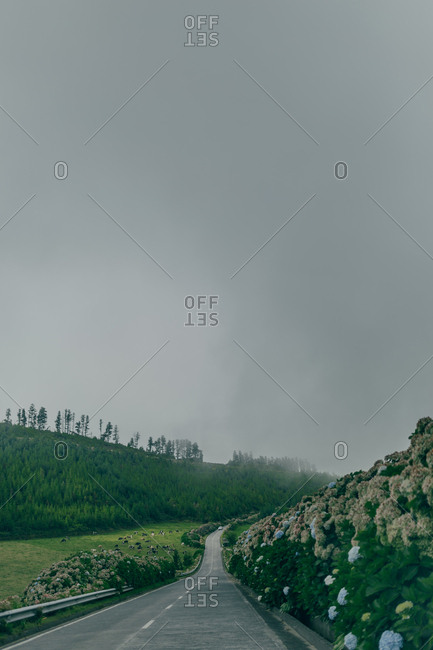Empty motorway between green grass and bushes on background of gray gloomy sky