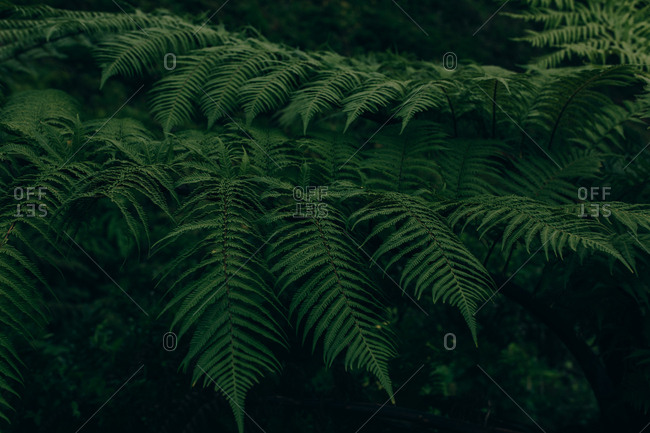 Green lush leaves of plant growing in dark forest