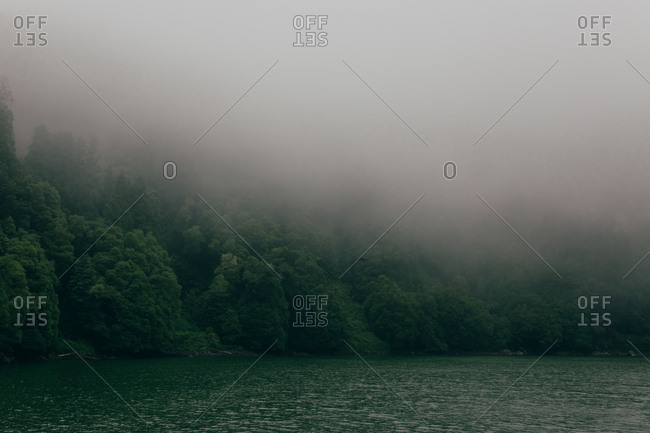 Coast of still pure lake covered with green lush trees under gray thick fog