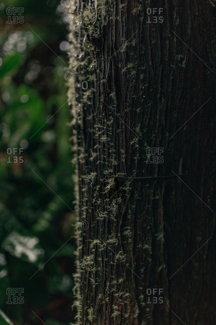 Closeup view of bark of tree trunk in forest on background of green plants