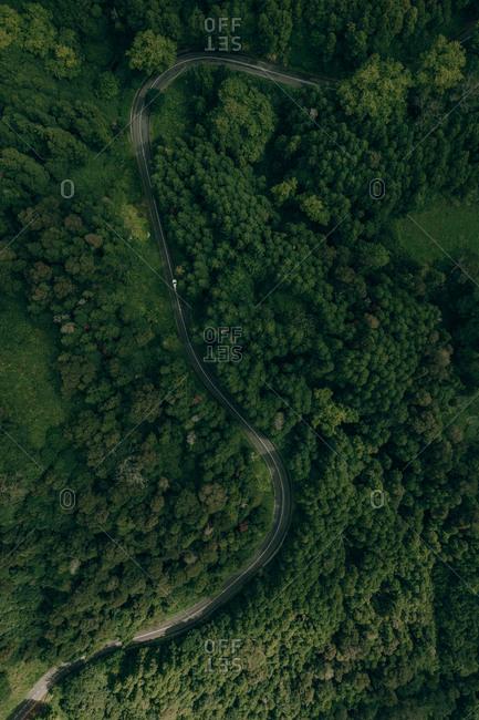 Motorway in green forest