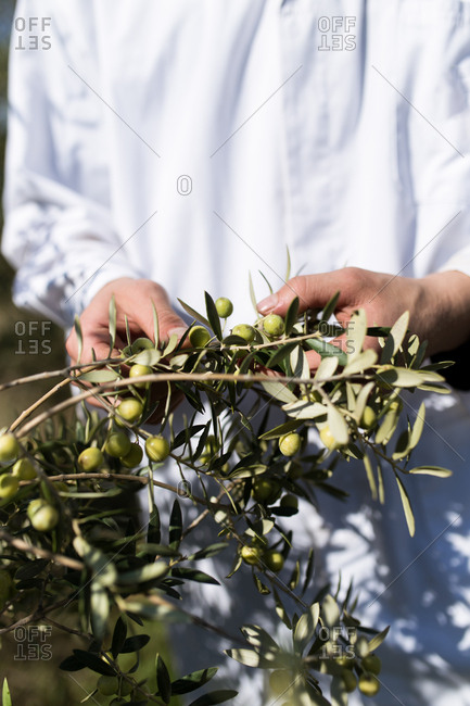 Young farmer man with white coat examining an olive production