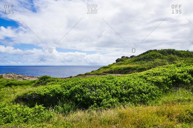 Green vegetation on the coastline, Maui, Hawaii
