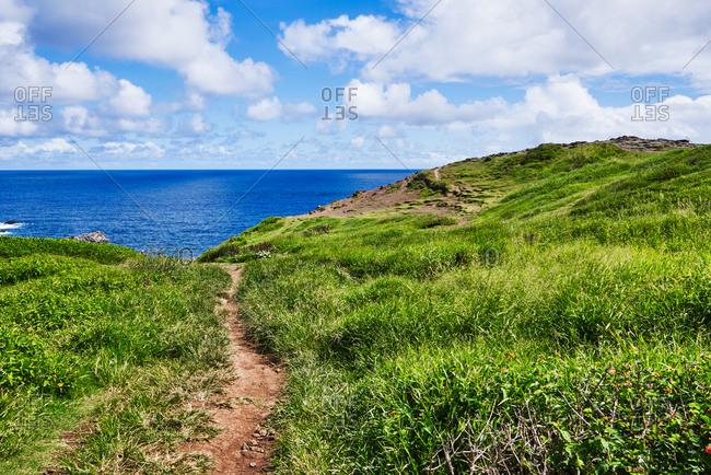 Path leading through green grass on the coastline, Maui, Hawaii