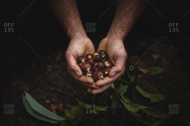 Crop hands with chestnuts