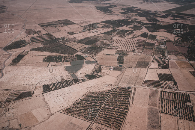 Aerial view of Morocco land with plants and trees in rows