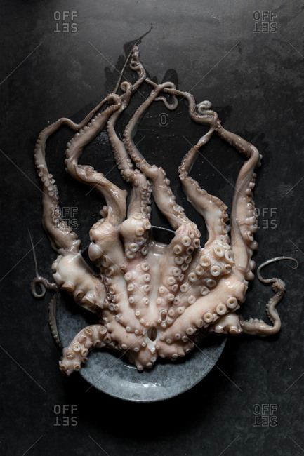 From above shot of uncooked octopus tentacles lying on plate on black marble tabletop