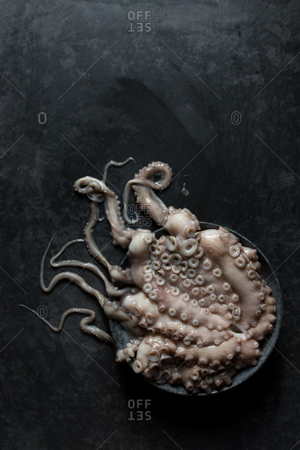 Raw octopus on plate