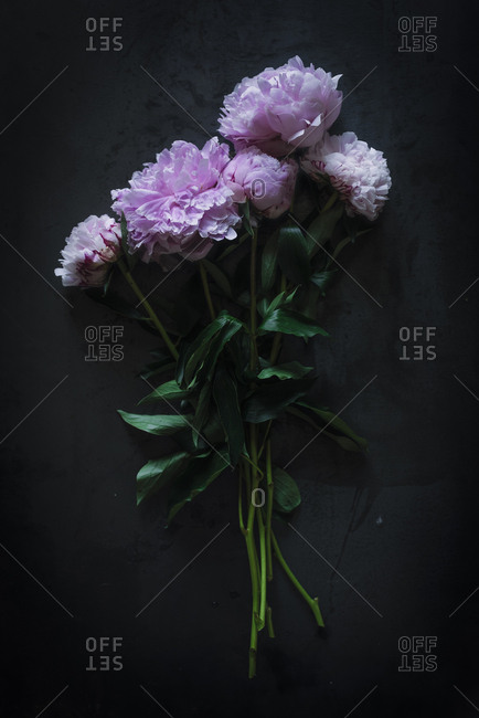 Bunch of pretty pink peonies standing near black wall in dark room