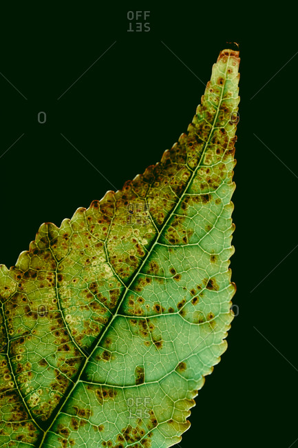 Textured rustic on green background