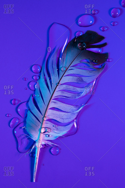 Drops of water on feather