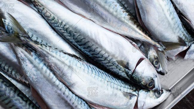 Istanbul, Turkey - September 28, 2017: Close-up of fresh caught mackerel