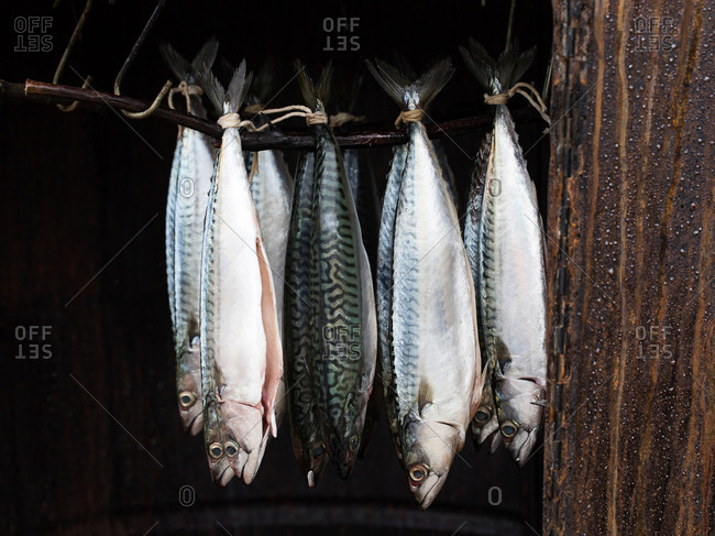 Istanbul, Turkey - September 28, 2017: Atlantic Mackerel hanging to dry