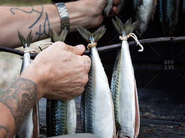 Istanbul, Turkey - September 28, 2017: Man adjusting Atlantic Mackerel that are hanging in a smoker