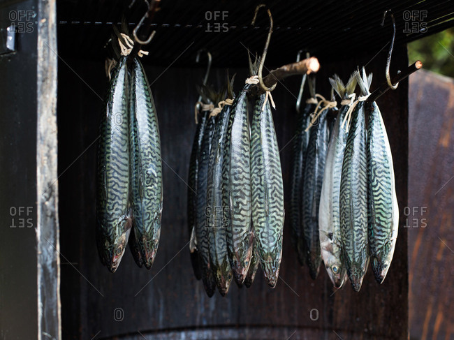 Istanbul, Turkey - September 28, 2017: Mackerel hanging in a smoker