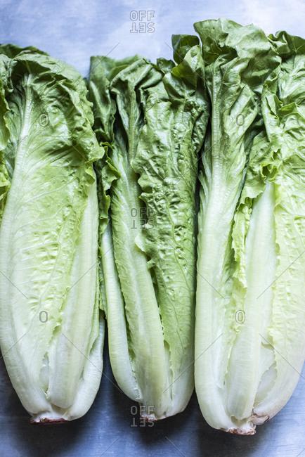 Green romaine lettuce on blue background