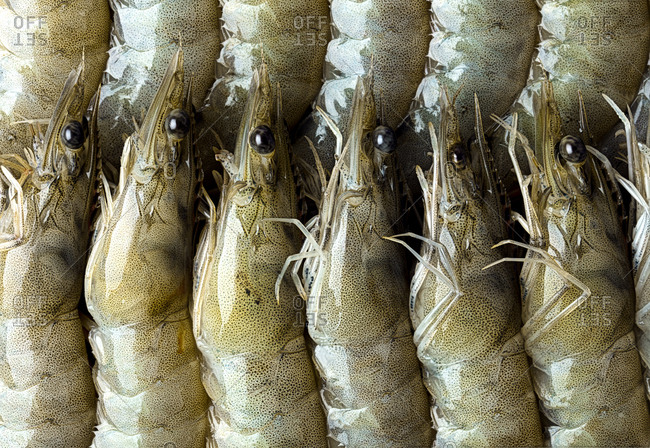 Shrimp arranged in a pattern