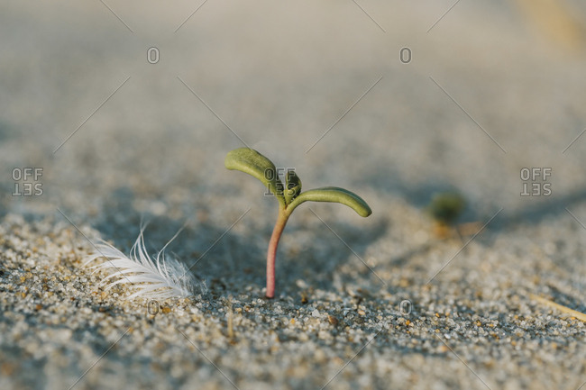 Close-up of plant growing on sand at beach during sunny day