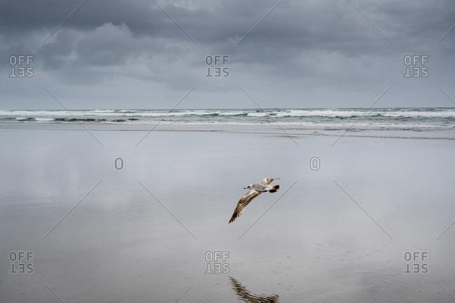 Bird flying at beach against cloudy sky