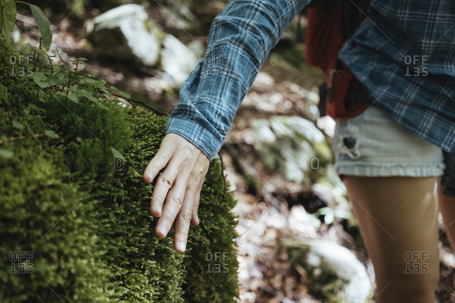 Midsection of female hiker touching plants in forest