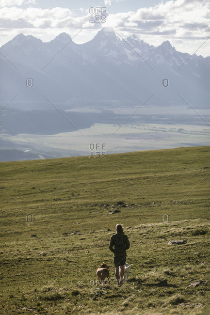 Rear view of male hiker with dogs walking on mountain against sky during sunny day