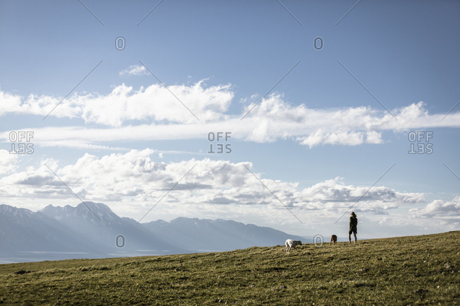 Male hiker with dogs standing on mountain against sky during sunny day