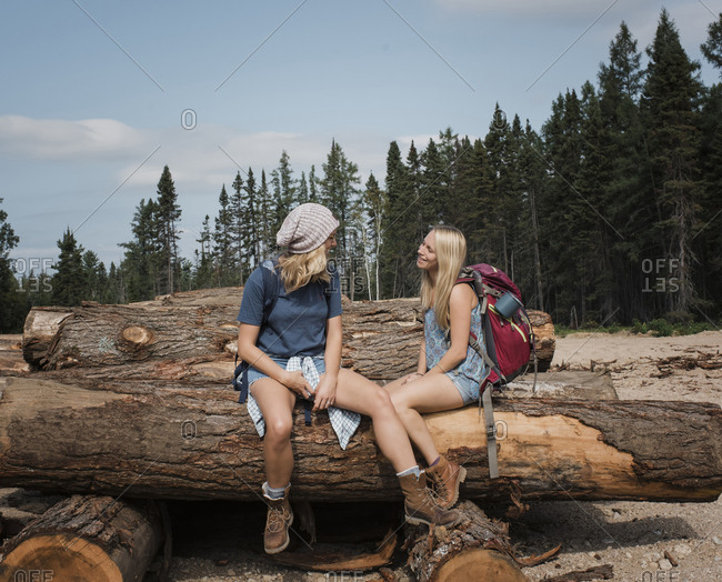 Female friends talking while sitting on logs against sky in forest during sunny day