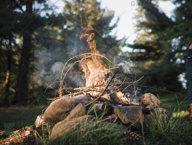 Close-up of campfire against trees in forest