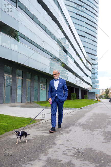 Senior man in suit walking with Chihuahua on road against building
