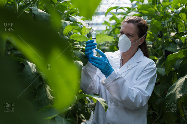 Female scientist holding syringe in greenhouse