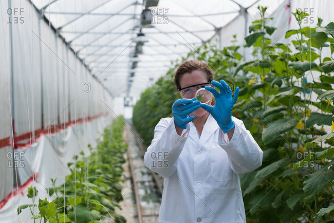 Female scientist holding specimen in green house