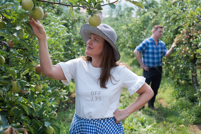 Woman and man examining fruits in the farm