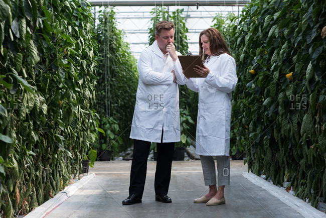 Two scientists looking at clipboard in the greenhouse