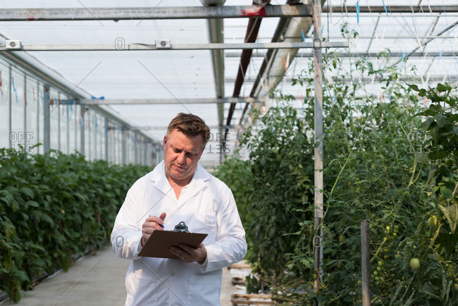 Concentrated scientist checking his clipboard in the greenhouse