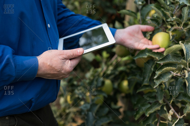 Mid section of man with digital tablet touching fruits in greenhouse