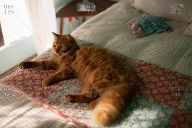 Cat lying in bed at home