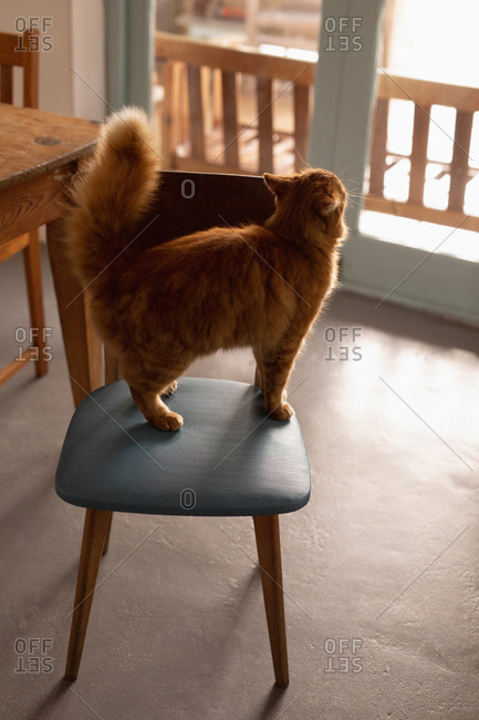 Cat standing on chair at home