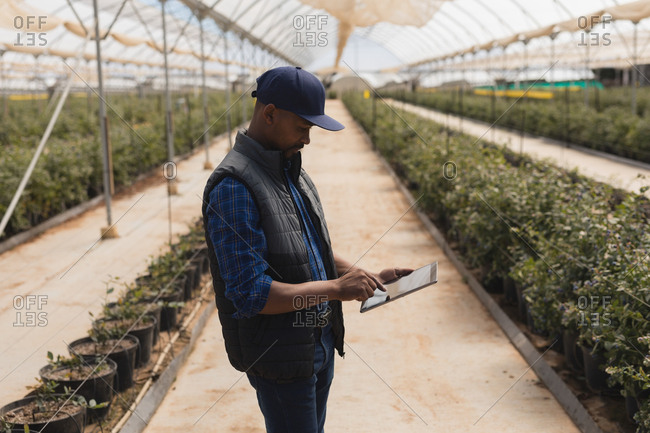 Side view of man using digital tablet in blueberry farm