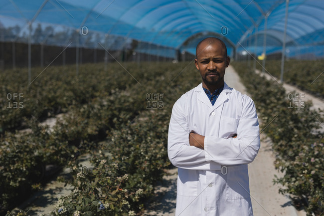 Portrait of man standing with arms crossed in blueberry farm